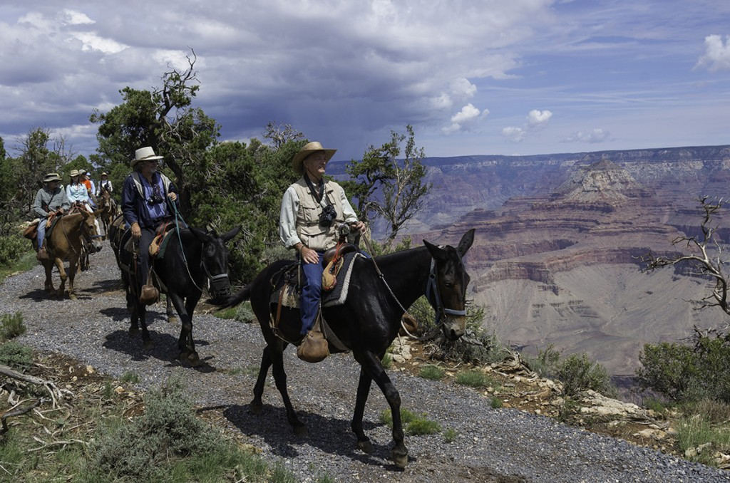 Grand Canyon Vistas Mule Ride by Xanterra, Grand Canyon National